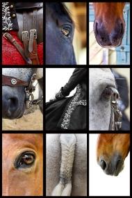 mosaique-cheval